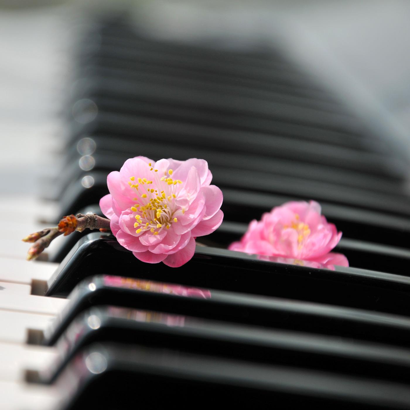 Go Premium - Zen Radio | Relaxation & Meditation Music